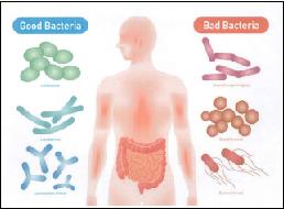 認知症予防に腸内細菌