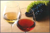 夏にピッタリ白ワイン